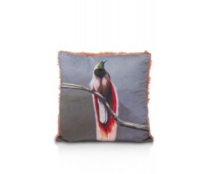cma DEC bird of paradise front