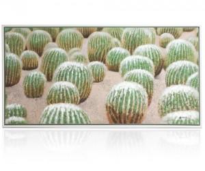 Tableau multiples cactus ronds