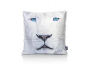 cma dec white tiger front