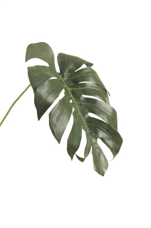 CMA GRN Monstera Leaf