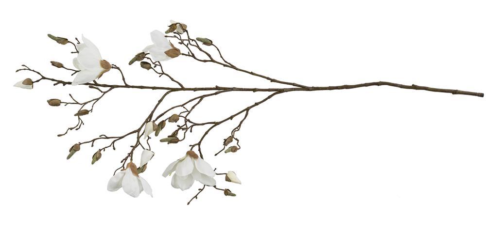YOU magnolia