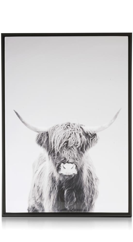 Affiche encadrée taureau noir et blanc