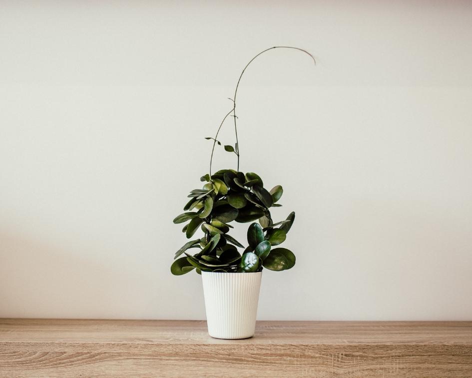 plante verte dans pot blanc