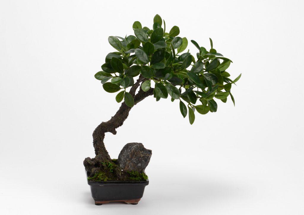 Plante artificielle bonsai contenant noir