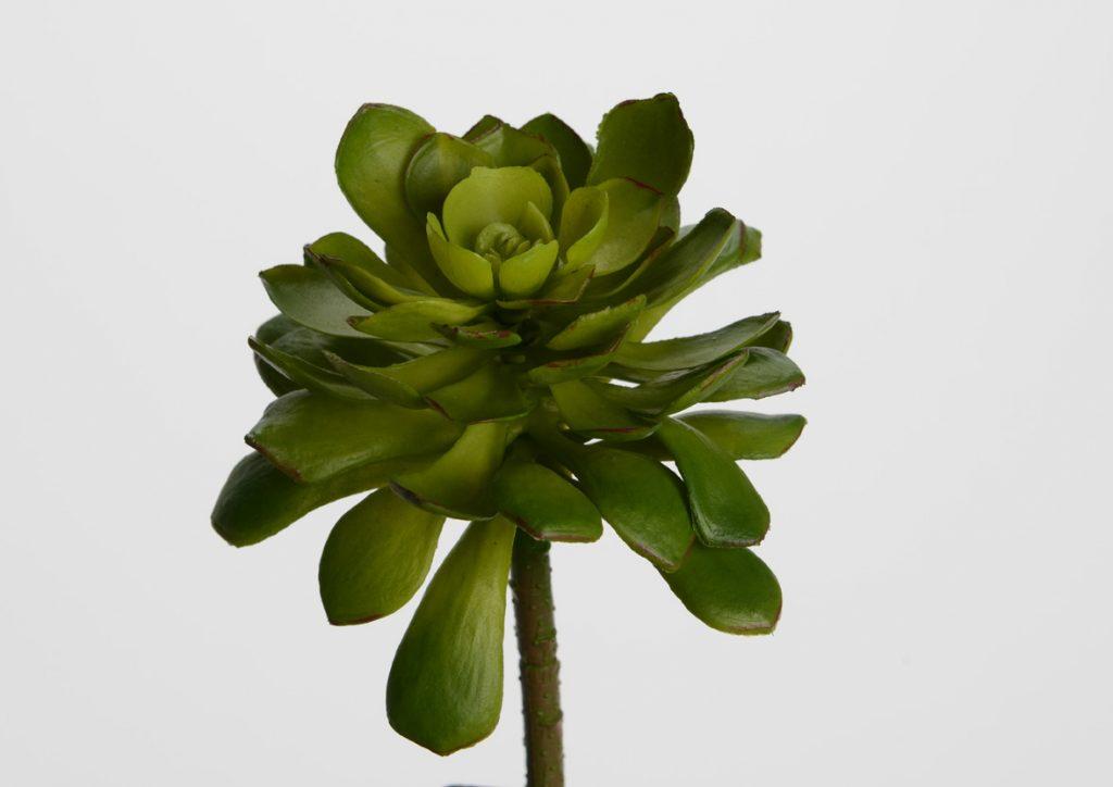 Plante grasse artificielle Echevaria cuspidata
