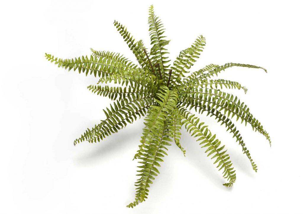 Plante artificielle fougère