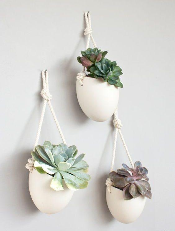 trois plantes grasses murales pots blancs