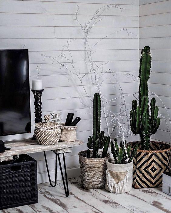 Coin salon déco paniers cactus
