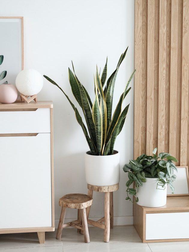 Plantes intérieur ambiance scandinave